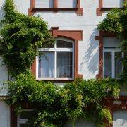 都市緑化・壁面緑化
