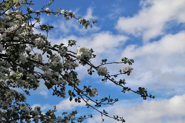 5月の季節