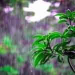 7月の大雨