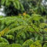 梅雨末期の雨