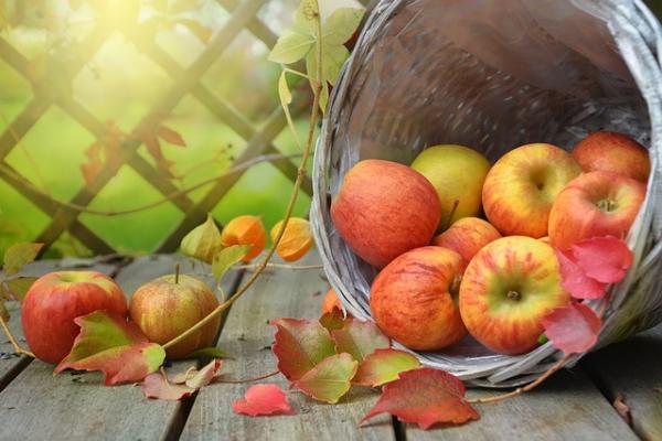 10月の秋