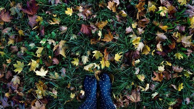 11月の秋の深まり
