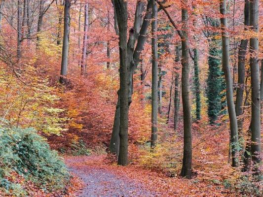 短き秋の光景