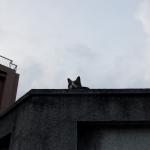 【2020年9月14日】本日の地震活動傾向